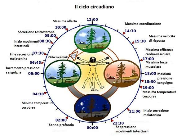 ciclo-circadiano-web