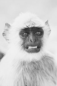 A monkey looking embarassed