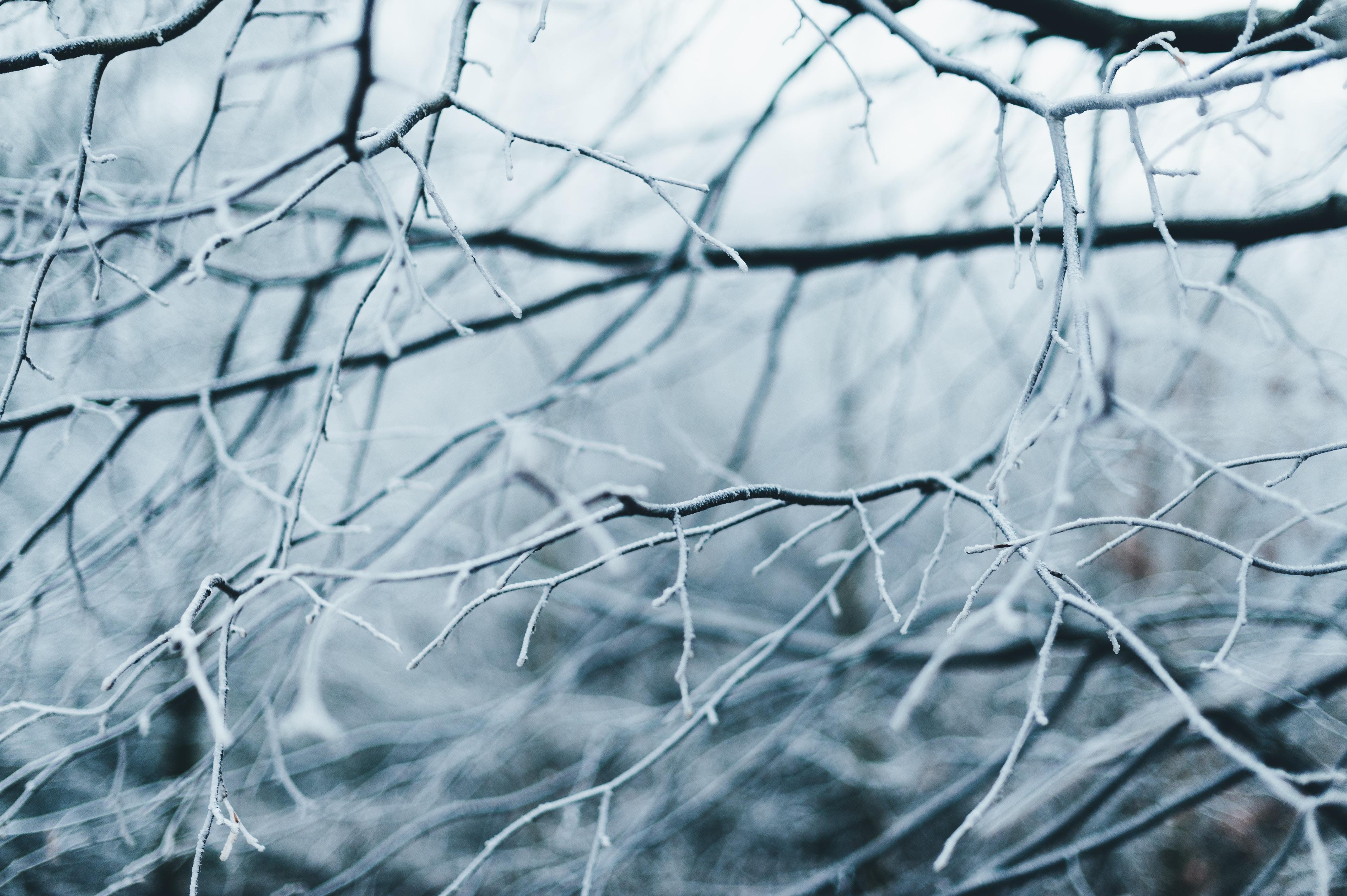 anna-popovic-167310-unsplash-winter-free