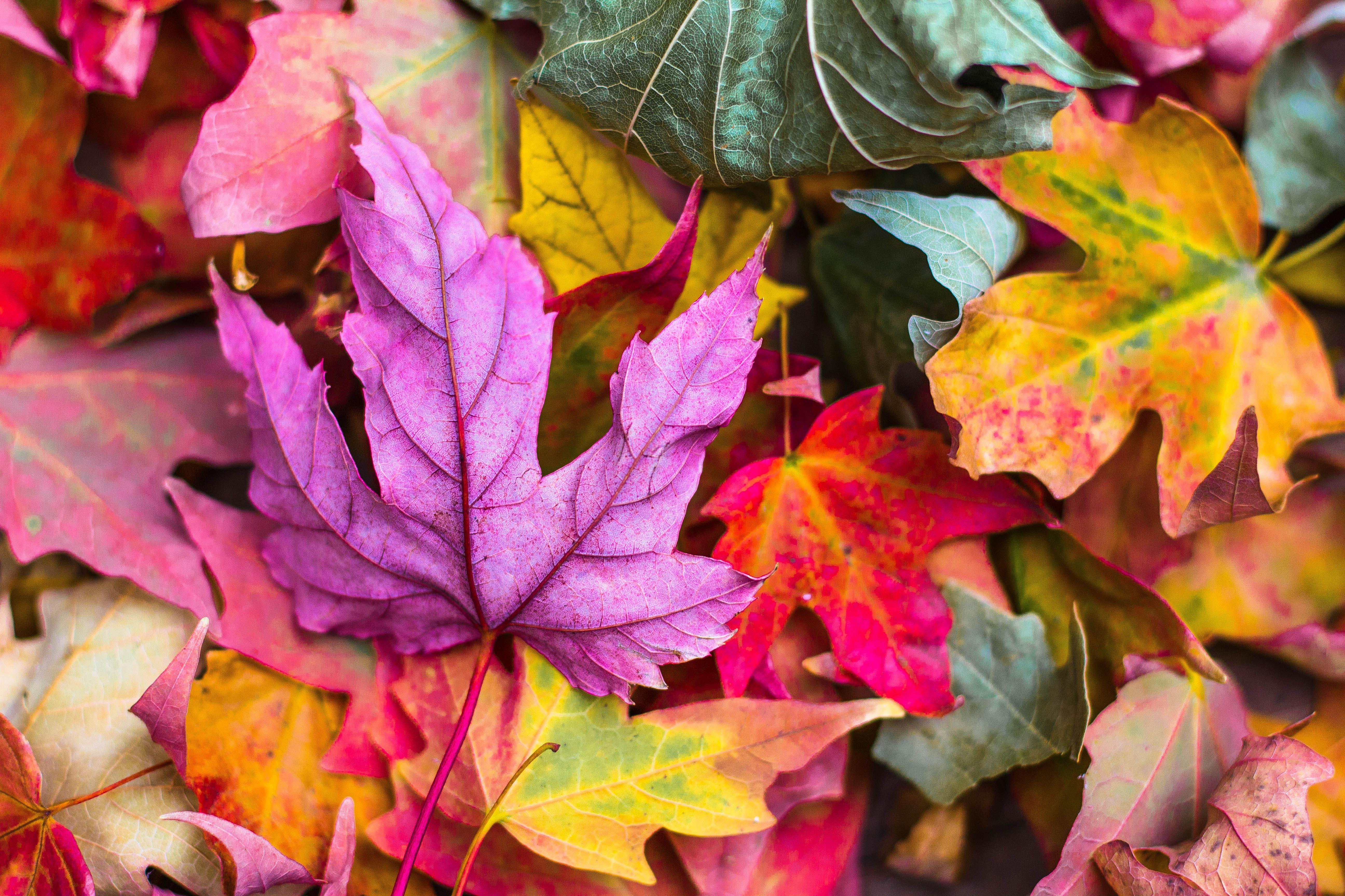 jeremy-thomas-79493-unsplash-autumn-leaves