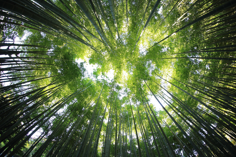 kazuend-30877-unsplash-trees-spring-growth-free