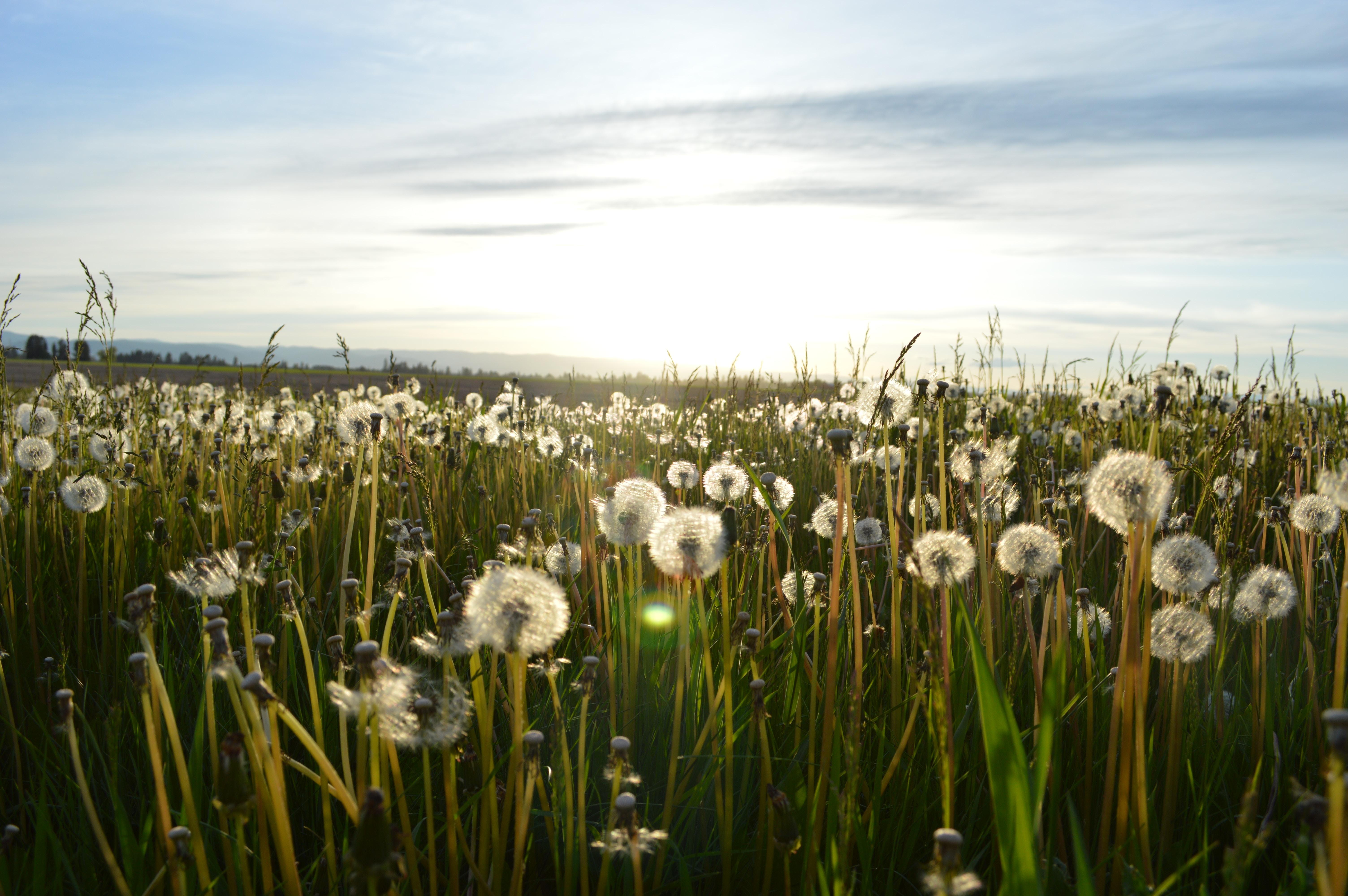 jason-long-718-unsplash free grass skye