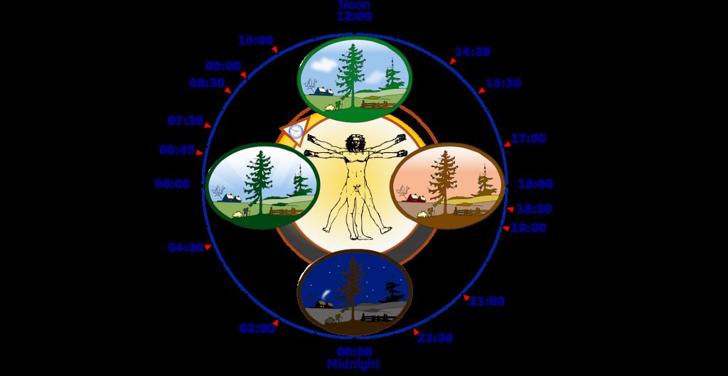 circadian clock in humans